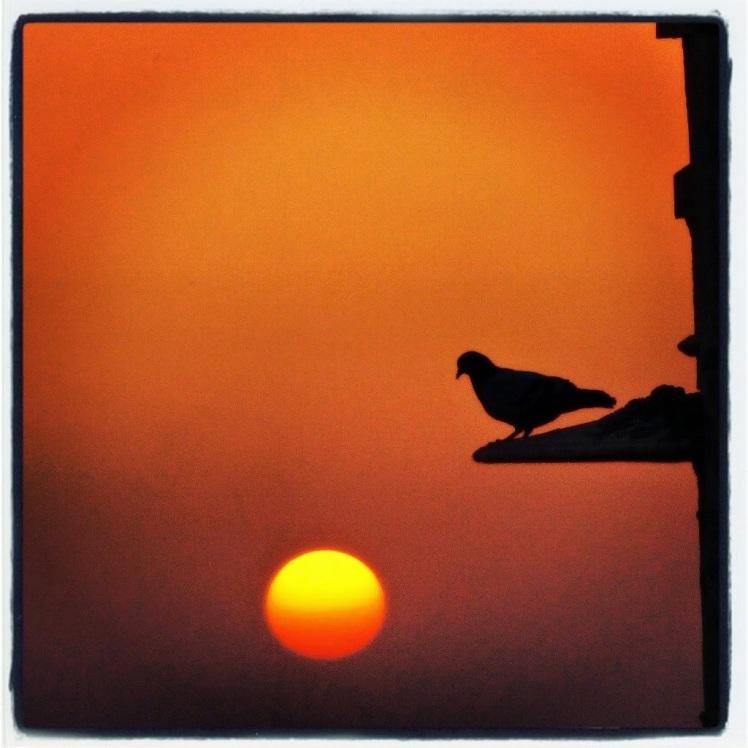 Pigeon resting on Jaisalmer Fort